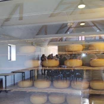 Bezoek aan kaasboerderij